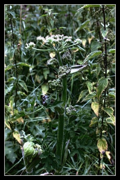 Theo-Herbots-Bloemenfotografie